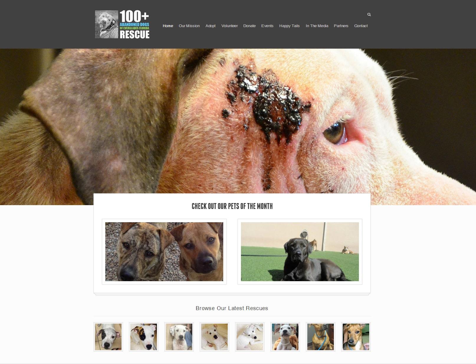 100+ Abandoned Dogs Foundation